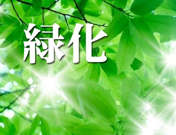 緑化のその後